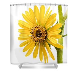 Graceful Beauty II Shower Curtain by Anita Oakley