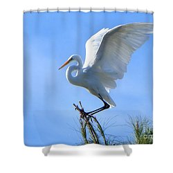 Shower Curtain featuring the photograph Graceful Landing by Deb Halloran