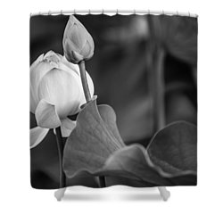 Graceful Lotus. Balck And White. Pamplemousses Botanical Garden. Mauritius Shower Curtain by Jenny Rainbow