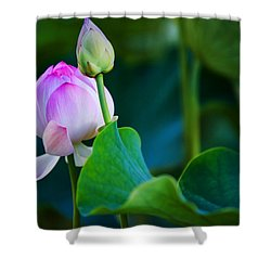 Graceful Lotus. Pamplemousses Botanical Garden. Mauritius Shower Curtain
