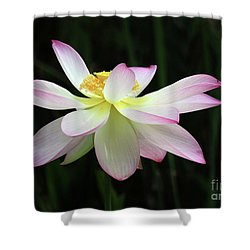 Graceful Lotus Shower Curtain