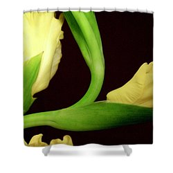 Gracefully Dawning Shower Curtain