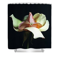 Shower Curtain featuring the photograph Gracious Gratitude by Elsa Marie Santoro