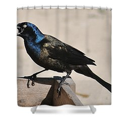 Grackle Chow Down Shower Curtain