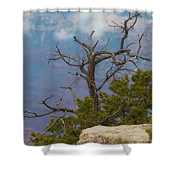Shower Curtain featuring the photograph Grand Canyon Tree by Rod Wiens