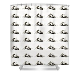 Shower Curtain featuring the photograph Grand Kitty Cuteness Bw 40 by Andee Design