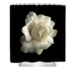 Grandeur Ivory Rose Flower Shower Curtain