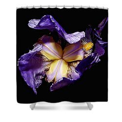 Grandma's Iris's  Shower Curtain