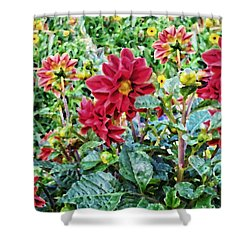 Grandpa's Dahlias Shower Curtain by Thomas Woolworth