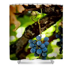 Grape Cluster Shower Curtain