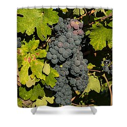 Grape Harvest Shower Curtain by Suzanne Luft