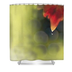 Grape Leaf Water Drop Shower Curtain by Kume Bryant