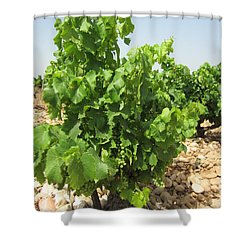 Grape Plant Shower Curtain by Pema Hou