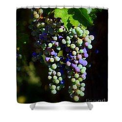 Grape Pre-vino Shower Curtain by Patrick Witz