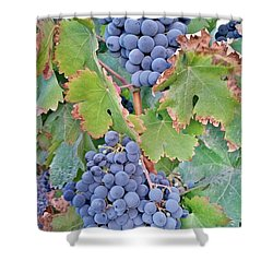 Grapes  Shower Curtain