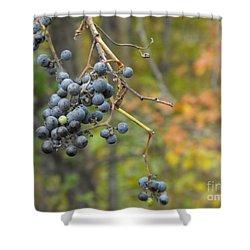 Grapes Left Shower Curtain