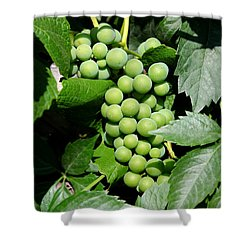 Grapes On The Vine Shower Curtain by Carol Groenen