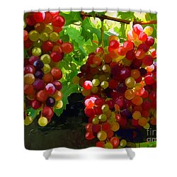 Grapes On The Vine Shower Curtain by Tim Gilliland