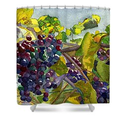 Shower Curtain featuring the painting Grapevines by Lynne Reichhart