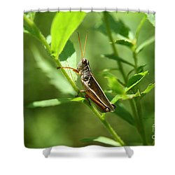 Grasshopper Climb Shower Curtain by Neal Eslinger