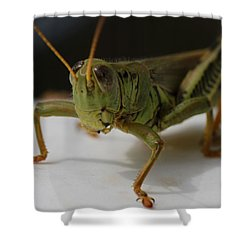 Grasshopper Shower Curtain by Dan Sproul