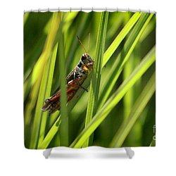 Grasshopper In Grass Shower Curtain