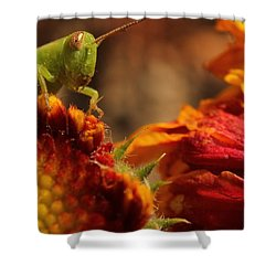 Grasshopper In The Marigolds Shower Curtain