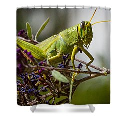 Shower Curtain featuring the photograph Grasshopper by Janis Knight