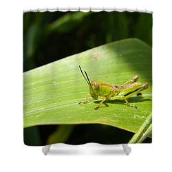 Grasshopper On Corn Leaf   Shower Curtain