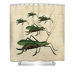 Grasshopper Parade Shower Curtain by Antique Images