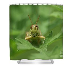 Shower Curtain featuring the photograph Grasshopper Portrait by Olga Hamilton
