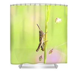 Grasshopper  Shower Curtain by Tommytechno Sweden