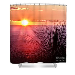 Shower Curtain featuring the photograph Grasstree Sunset by Peta Thames