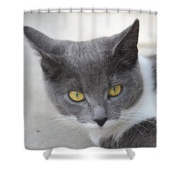 Gray Cat - Listening Shower Curtain by Tine Nordbred