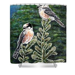 Shower Curtain featuring the painting Gray Jays by VLee Watson