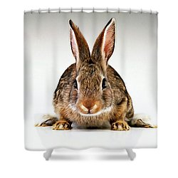 Gray Rabbit Bunny  Shower Curtain by Lanjee Chee