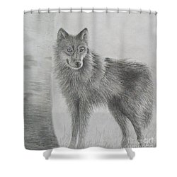Shower Curtain featuring the drawing Gray Wolf by Phyllis Howard