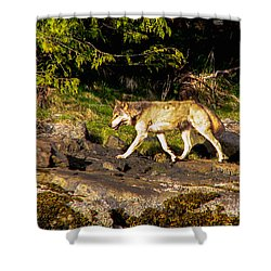 Gray Wolf Shower Curtain by Robert Bales