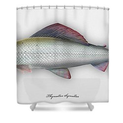 Grayling - Thymallus Thymallus - Ombre Commun - Harjus - Flyfishing - Trout Waters - Trout Creek Shower Curtain