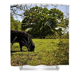 Grazing Alabama Shower Curtain by Verana Stark