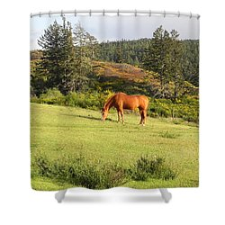Shower Curtain featuring the photograph Grazing by Cheryl Hoyle