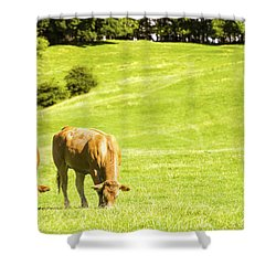 Grazing Cows Shower Curtain by Amanda Elwell
