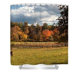 Grazing On The Farm Shower Curtain by Joann Vitali