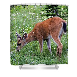 Grazing Young Buck Shower Curtain by Mike Dawson