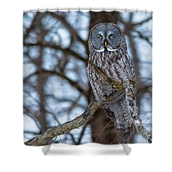 Great Beauty Shower Curtain by Cheryl Baxter