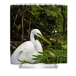 Great Blue Heron - White Shower Curtain