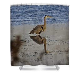 Great Blue Heron 1 Shower Curtain by SC Heffner