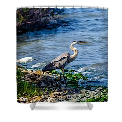 Great Blue Heron And Snowy Egret At Dinner Time Shower Curtain by Debra Martz