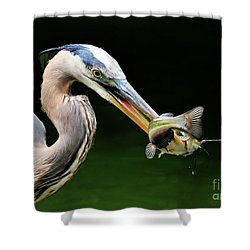Great Blue Heron And The Catfish Shower Curtain by Kathy Baccari