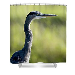 Great Blue Heron Backlit Shower Curtain